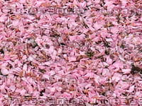 Cherry Blossom Ground Texture