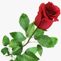flowers red rose 3d max