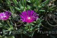 Noon Flower 2