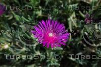 Noon Flower 3