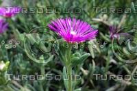 Noon Flower 4
