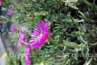 Noon Flower 5