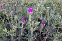 Noon Flower 9