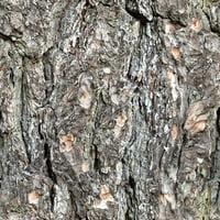 Tree Bark 00A