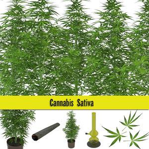 3d model marijuana