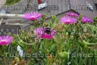 Bumblebee Noon Flower 12