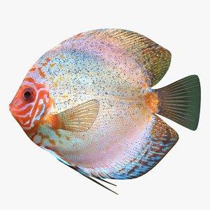 3ds discus fish