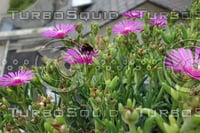 Bumblebee Noon Flower 14
