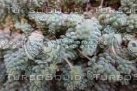 Plant DSC09141