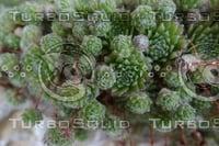 Plant DSC09142