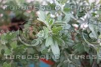 Plant DSC09144