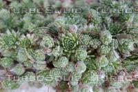 Plant DSC 9143