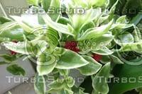 Plant DSC09145