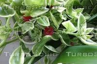 Plant DSC09146