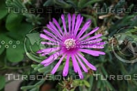 Noon Flower 17