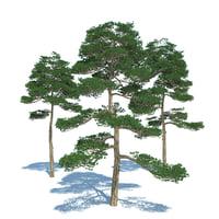 Pine - Set 3