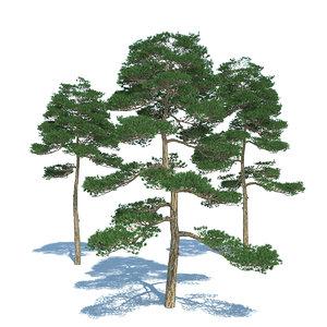 pine - set 3 3d max