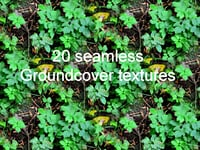 Groundcover Collection