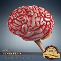 3d 3ds brain details