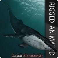 humpback whale - megaptera fbx