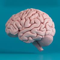 human brain 3d max