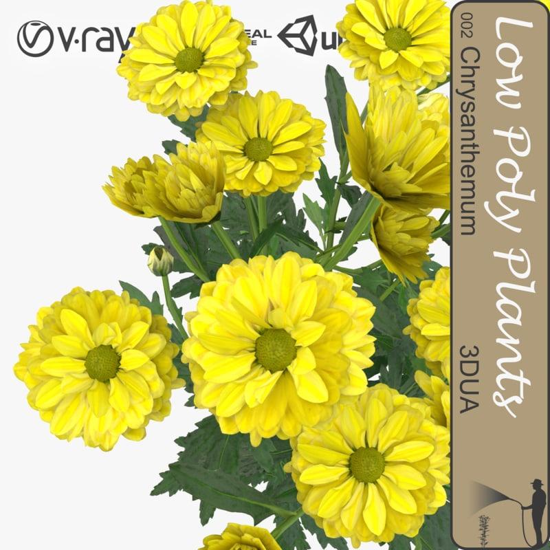 plant chrysanthemum 3d model