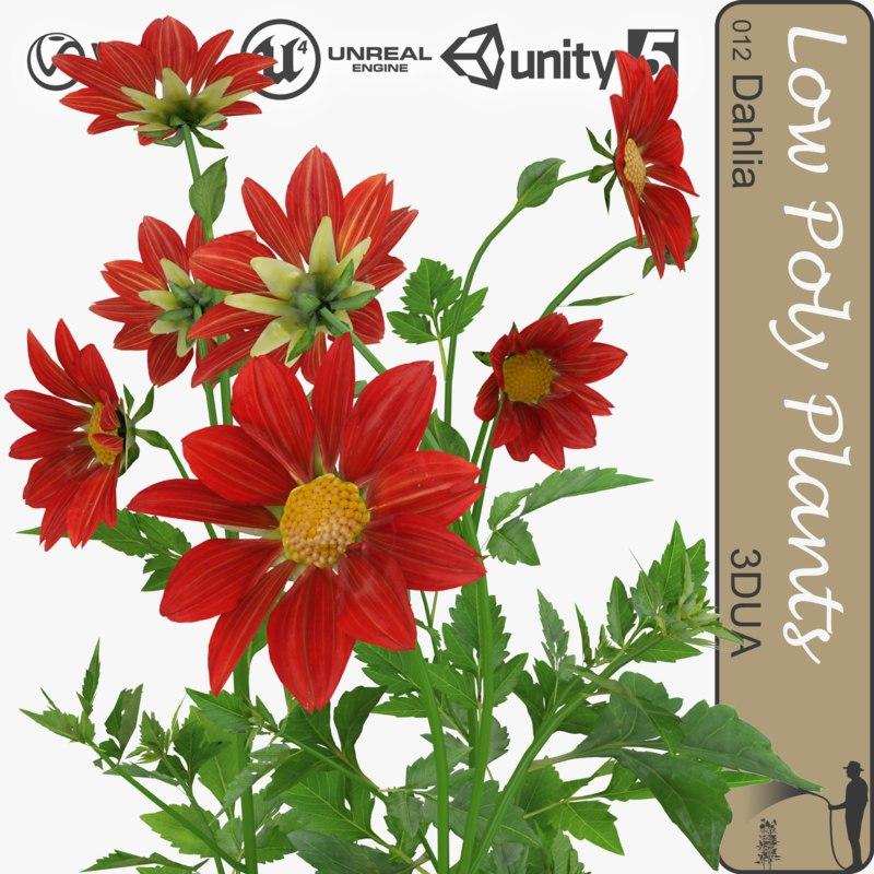 plant 012 dahlia max