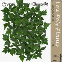 plant 009 aegopodium 3d model