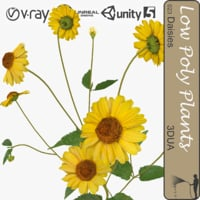 3d yellow daisy 023