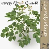 potato plant 031 3d max