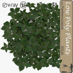plant 043 parthenocissus s 3d model