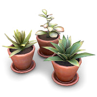 Potted Plants Bundle 1B