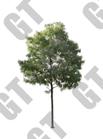 PNG_Tree_001