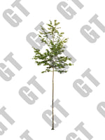 PNG_Tree_002