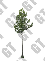 PNG_Tree_003