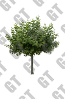 PNG_Tree_004