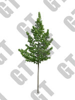 PNG_Tree_005