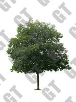 PNG_Tree_006