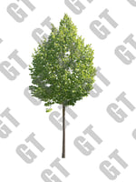 PNG_Tree_007