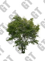 PNG_Tree_008
