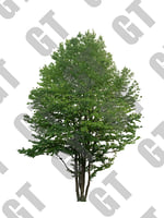 PNG_Tree_010