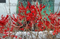 BERRY TREE AND ART AT HIGH LINE PARK NEW YORK, NEW YORK
