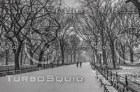 WINTER IN CENTRAL PARK NEW YORK, NEW YORK B&W