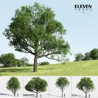 Eleven Trees 4