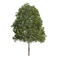 medium tree 3d max