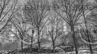 WINTER IN CENTRAL PARK NEW YORK B&W