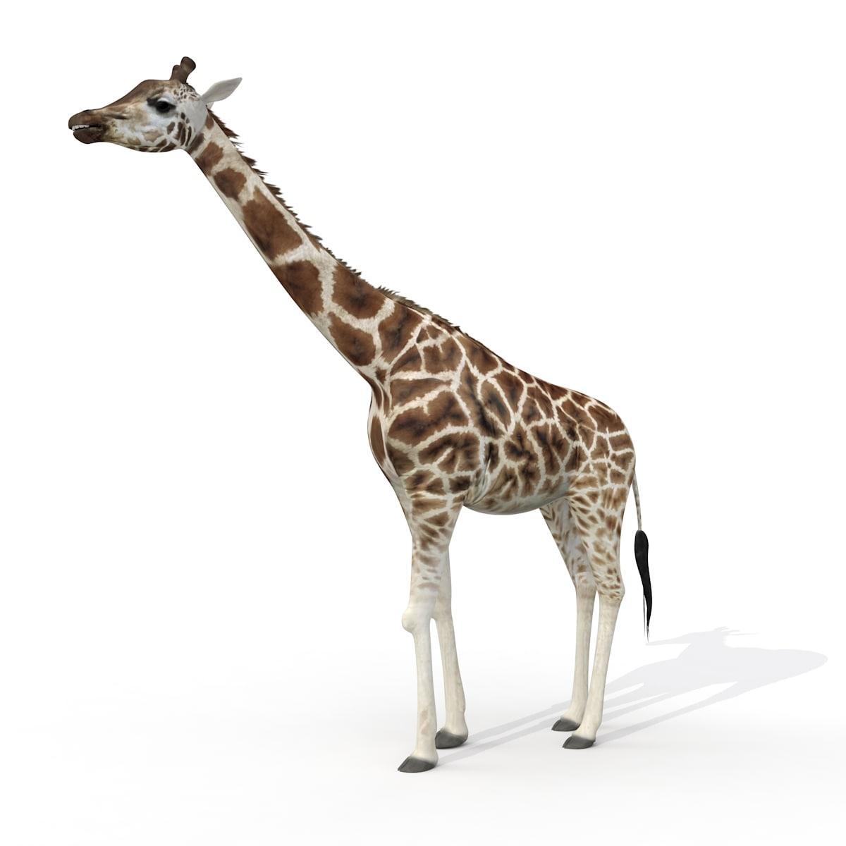 giraffe 3d max
