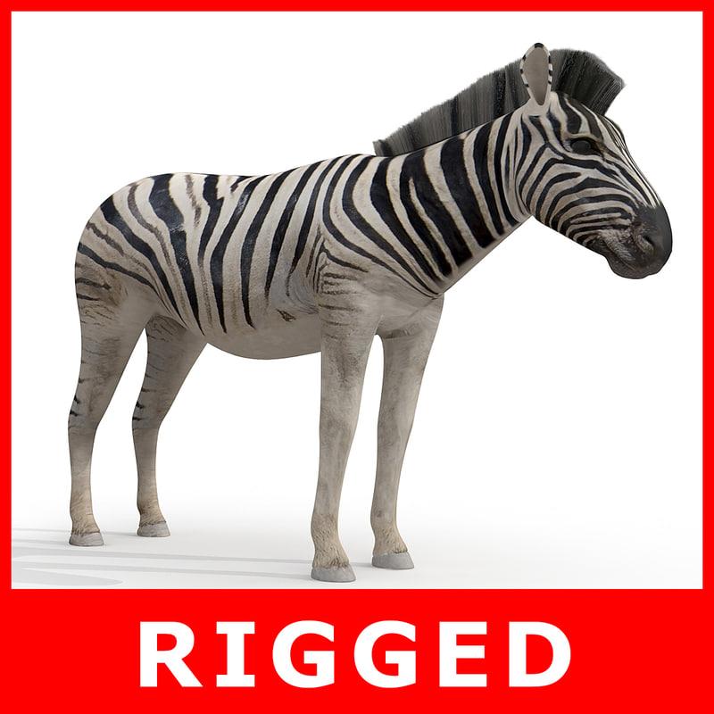 3d zebra rigged model