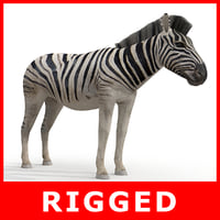 3d zebra rigged model