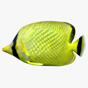 latticed butterfly fish 3d 3ds